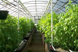 How 1 MILLION Pounds Of Organic Food Can Be Produced On 3 Acres | Wake Up World | Share Some Love Today | Scoop.it