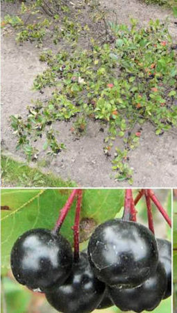 Finest heirloom quality tree and shrub seed | Seeds and Their Growing Importance | Scoop.it