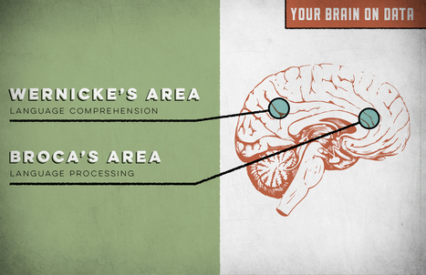 Activating Your Audience's Brain: Cool Graphics On How The Brain Works | Just Story It! Biz Storytelling | Scoop.it