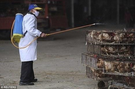 Mutating H7N9 bird flu may pose pandemic threat, scientists warn | Avian influenza virus A(H7N9) | Scoop.it