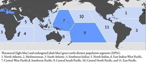 Successful Conservation Efforts Along Florida, Pacific Coasts Recognized in Revised ESA Listing of the Green Sea Turtle :: NOAA Fisheries | Conservation Success | Scoop.it