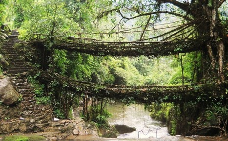 A Project Hopes to Save India's Vanishing Living Root Bridges | Heritage in danger (illicit traffic, emergencies, restitutions)-Patrimoine en danger | Scoop.it
