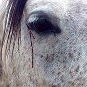 Stoppons le calvaire des chevaux en Amerique   Nature Animals humankind   Scoop.it