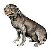 La couleur du pelage des premiers chiens éclaire leur domestication | World Neolithic | Scoop.it