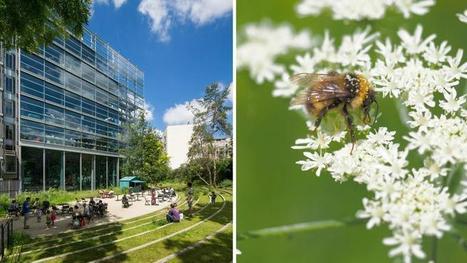 Fondation Cartier: un «jardin nature» en plein Paris | Paris durable | Scoop.it