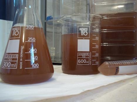 CCRES: Astaxanthin carotenoid | Algae | Scoop.it