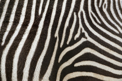 How The Zebra Got Its Stripes, With Alan Turing   Strange days indeed...   Scoop.it