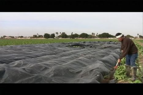Freeze warning issued, farmers scrambling to protect lettuce | KSWT (TV-Yuma) | CALS in the News | Scoop.it