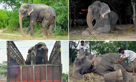 Incredible sight of the elephant that cried | Elephants | Scoop.it