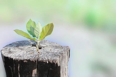 Let Your Leadership Speak For Itself - Lolly Daskal | Leadership and Personal Development | Digital | Scoop.it