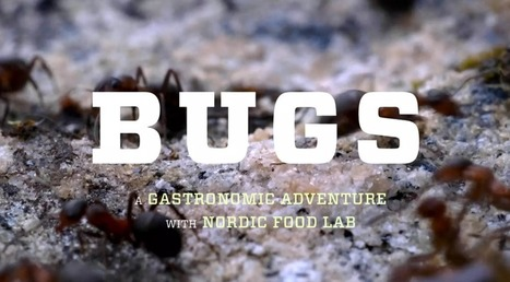 Documentaries for dorks who care about democracy and diets | Entomophagy: Edible Insects and the Future of Food | Scoop.it