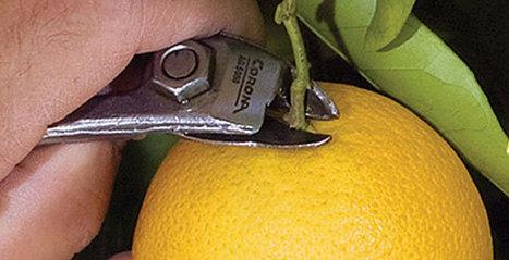 Corona Tools | Garden | Landscape | Tree Care | Shop Tools | Parts | Annie Haven | Haven Brand | Scoop.it