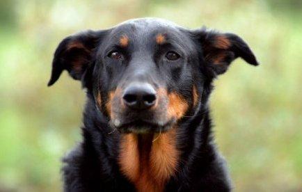 Allemagne : le droit de visite en cas de divorce ne s'applique pas aux chiens | Mais n'importe quoi ! | Scoop.it