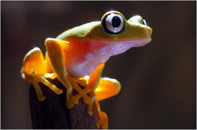Frog Facts For Kids | Interesting Facts about Frogs For Kids | AnimalsTime | Scoop.it