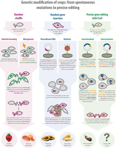 GM to Order - The Berkeley Science Review | BiotechRegulation | Scoop.it