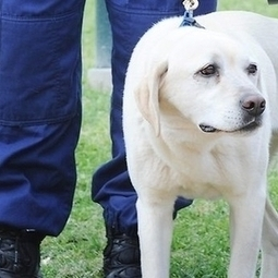 Drug research experts agree with banning sniffer dogs at festivals - inthemix   Research Capacity-Building in Africa   Scoop.it
