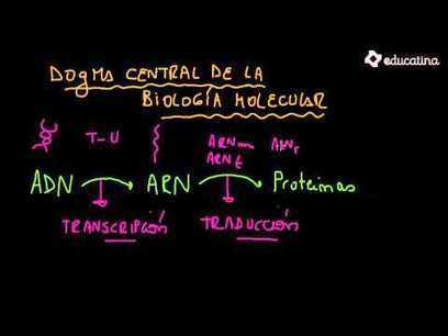 "Dogma Central de la Biología Molecular - Citología y Genética - Educatina | ""Biotech and Mol Bio"" 