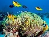 Sirenas: Las increíbles imágenes (Galería) - Animal Planet   Sirenas del mito a la realidad   Scoop.it