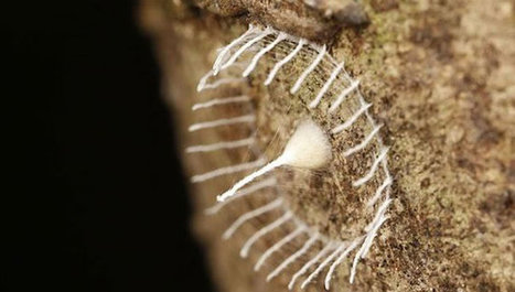 Mysterious Bug Builds Fence Around Eggs For Protection | animal science | Scoop.it