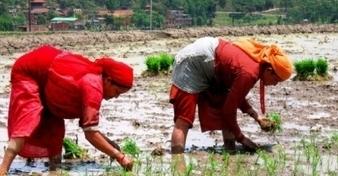CO2-uitstoot maakt eten minder voedzaam - DeWereldMorgen.be | Voeding in de wereld: helicopterview | Scoop.it