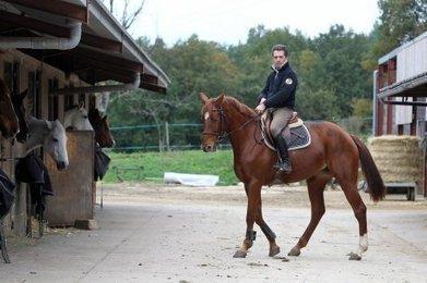 Une fièvre de cheval   Agriculture en Dordogne   Scoop.it
