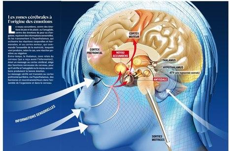 Quand la musique active la chimie du cerveau | Fonctionnement du cerveau & états de conscience avancés | Scoop.it
