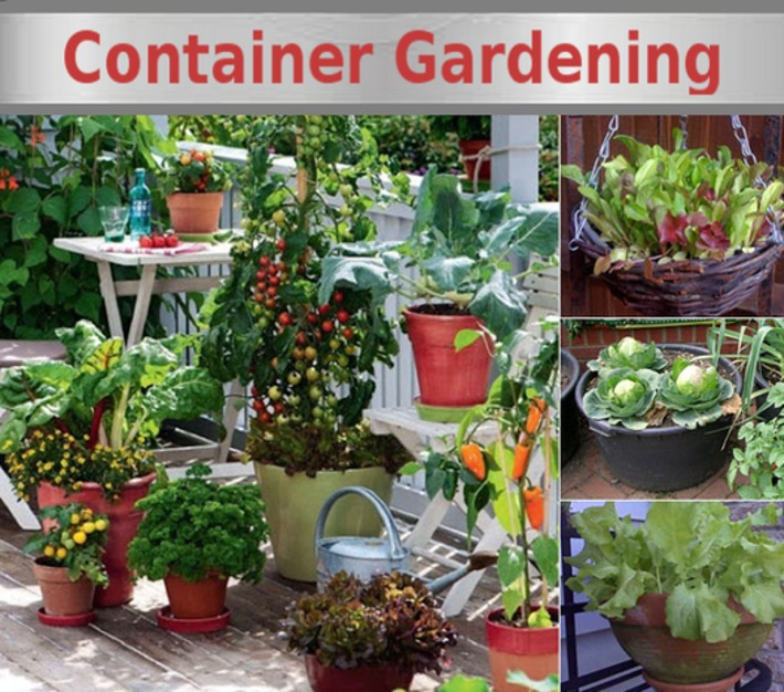 Growing Vegetables in Containers! | Container Gardening | Scoop.it
