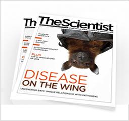 Platelets Fan Inflammation | The Scientist Magazine® | Longevity science | Scoop.it