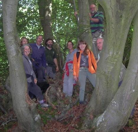 Largest beech tree on record discovered in Herefordshire (From Hereford Times) | QTRA | Scoop.it