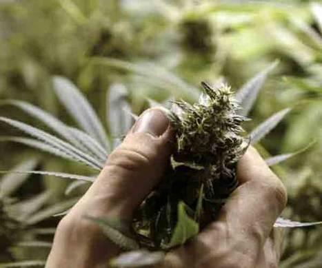 EU manifiesta preocupación por ley de marihuana en Uruguay - La Voz de la Frontera - OEM | thc barcelona | Scoop.it