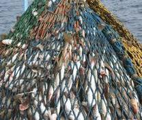 EU-Norway fish catch agreement reflects healthy stocks but challenges remain with discard ban - Aquaculture Directory   Aquaculture Directory   Scoop.it