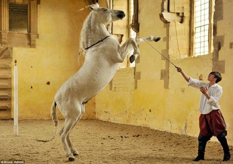 Britain's one and only horse ballet school brought back to life after 300 years | Dancing | Scoop.it