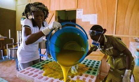 Renforcer les capacités des femmes à travers les TIC | Youth agriculture and ICT | Scoop.it