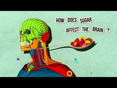 How sugar affects the brain - Nicole Avena | Learning, Brain & Cognitive Fitness | Scoop.it