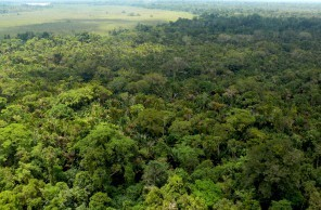 CIFOR Forests News Blog » Bonn climate talks: Forest-rich nations ... | Financing Nature Conservation | Scoop.it