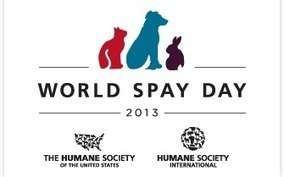 Help Promote World Spay Day! - Be the Change for Animals   Pet News   Scoop.it