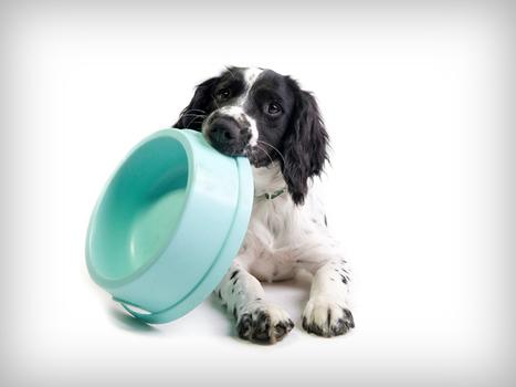 Salmonella prompts recall of dog, cat dry food | Pet News | Scoop.it