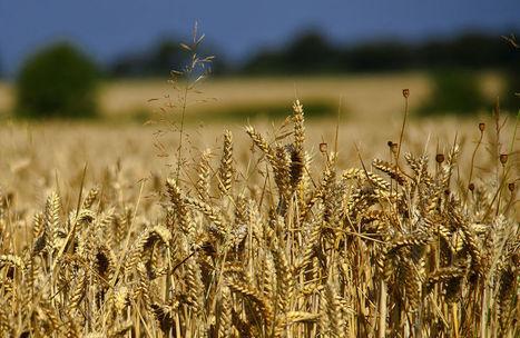 Régime: qui a peur du grand méchant gluten? - Rue89   Habitudes Alimentaires et Santé   Scoop.it