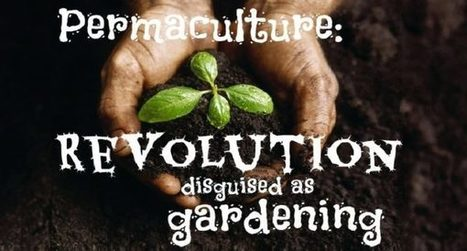 Permaculture: The Future of Self-Sufficient, Community-Based Living | Real Food Rebellion | Scoop.it