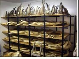No decision yet on SA rhino horn sales - Politics | IOL News | IOL.co.za | Kruger & African Wildlife | Scoop.it