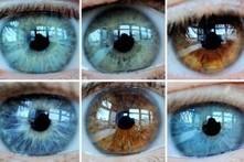 Unsere Pupillen verraten, wie wir uns fühlen | Weiterbildung | Scoop.it