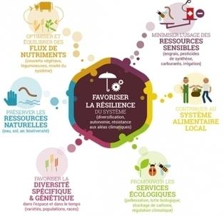 #EconomieRéelle : Qu'est-ce que l'agroécologie, fiche pratique | Economies alternatives ..... | Scoop.it