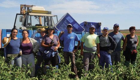Cañete dejará a 800.000 trabajadores agrícolas sin representación en las negociaciaciones del campo | Hermético diario | Scoop.it