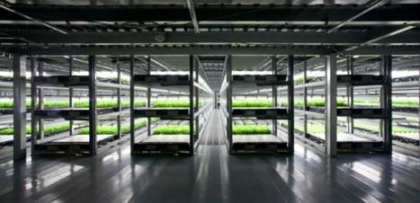 Le Japon construit la première ferme robotisée pour 2017 | Fruits & légumes à l'international | Scoop.it