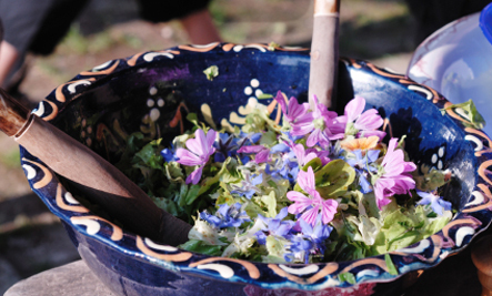 10 Common Flowers You Didn't Know You Should Eat | Health and Nutrition | Scoop.it