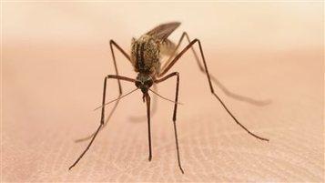 Virus du Nil occidental : risques accrus en Saskatchewan (Canada) | EntomoNews | Scoop.it