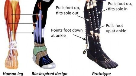 Soft pneumatic exoskeleton could be perfect for use in rehab | Longevity science | Scoop.it