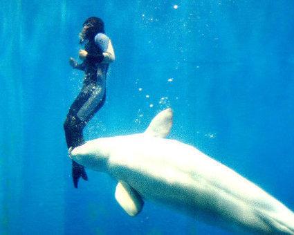 10 life-saving animals: Beluga whale | Animals Make Life Better | Scoop.it