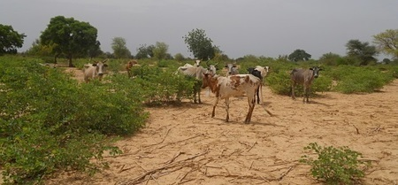 FAO adds agroforestry to toolbox | Ecosystèmes Tropicaux | Scoop.it