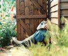 Garden sheds make men happy and healthy | AJCann | Scoop.it